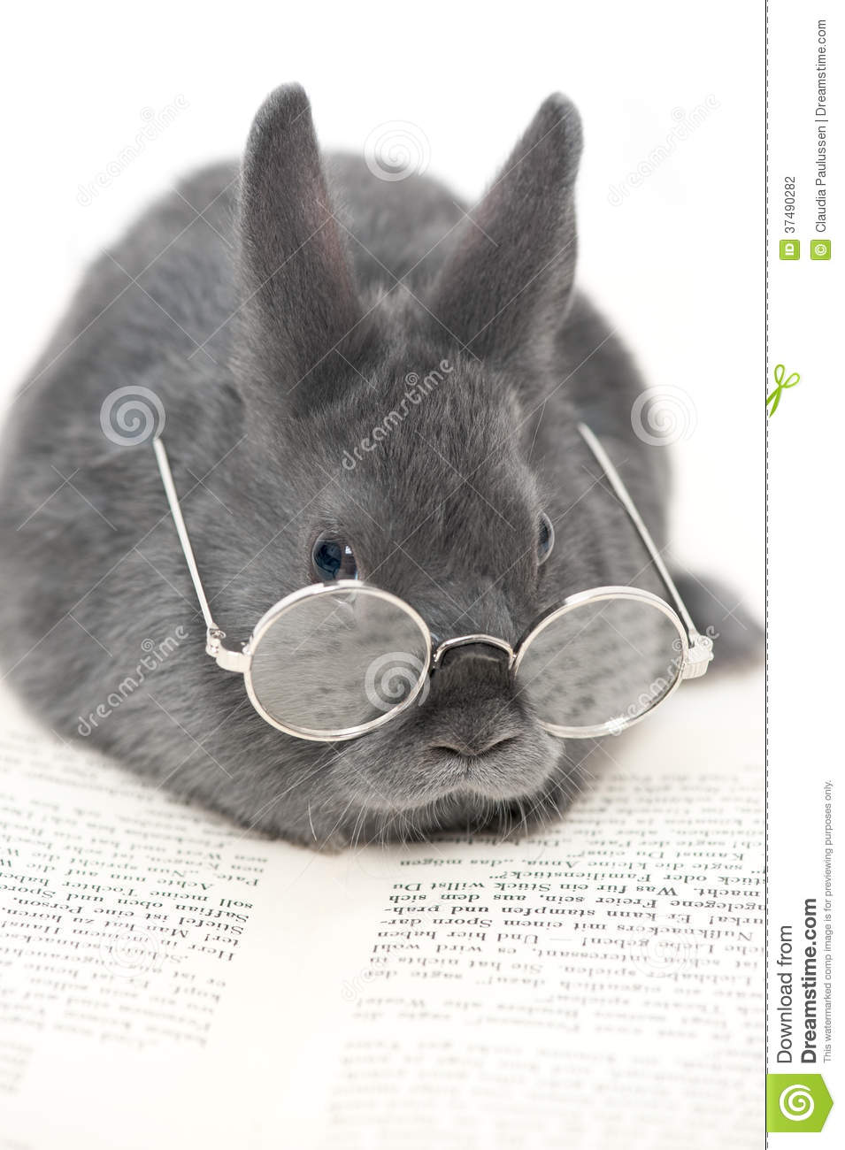 Rabbit With Glasses Stock Photo Image Of Glass