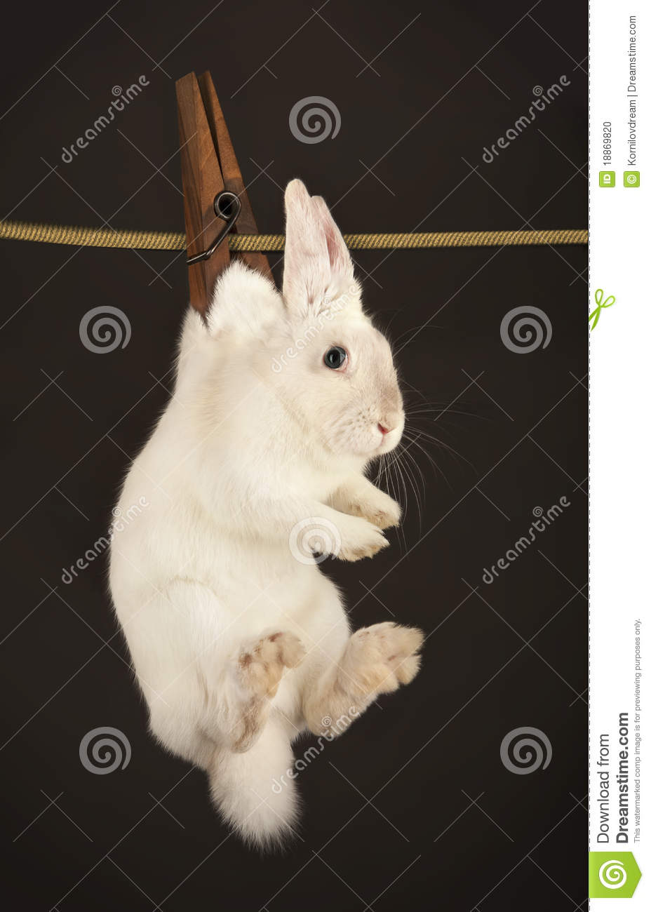 rabbit hanging on the clothesline stock photo