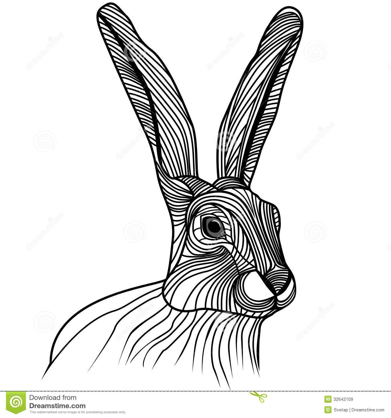 Hare illustration - photo#12
