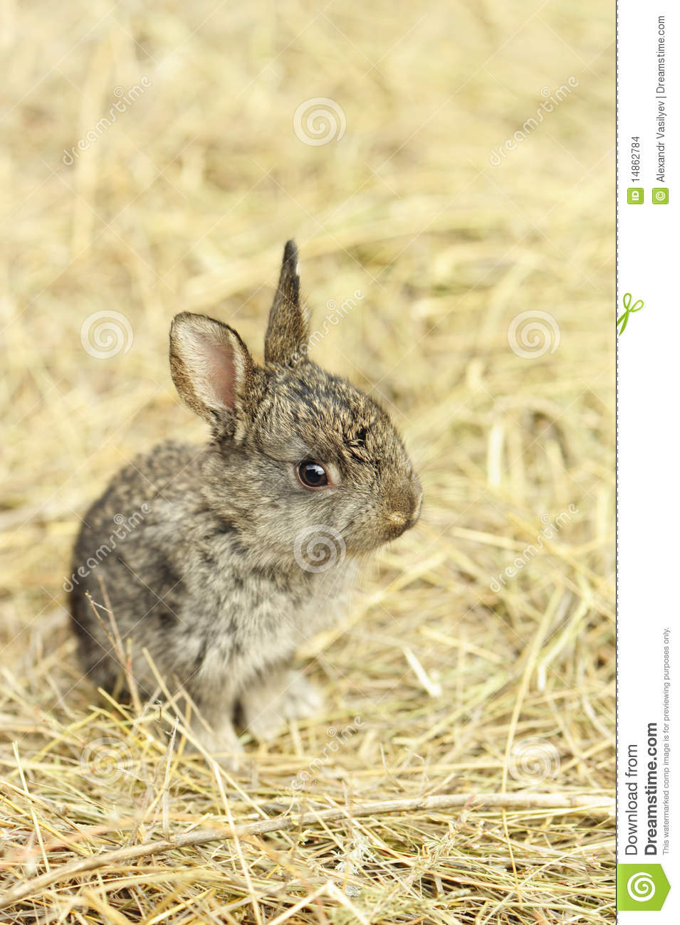 Rabbit on a hay