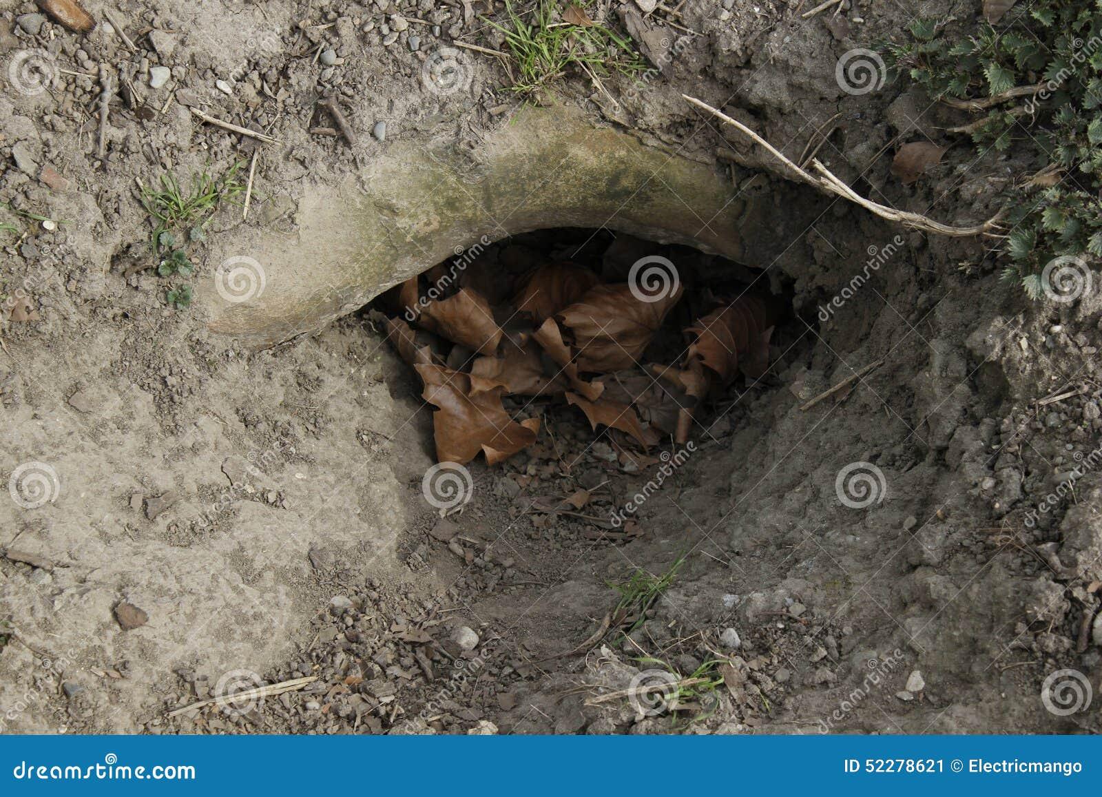 rabbit hole stock photo image 52278621
