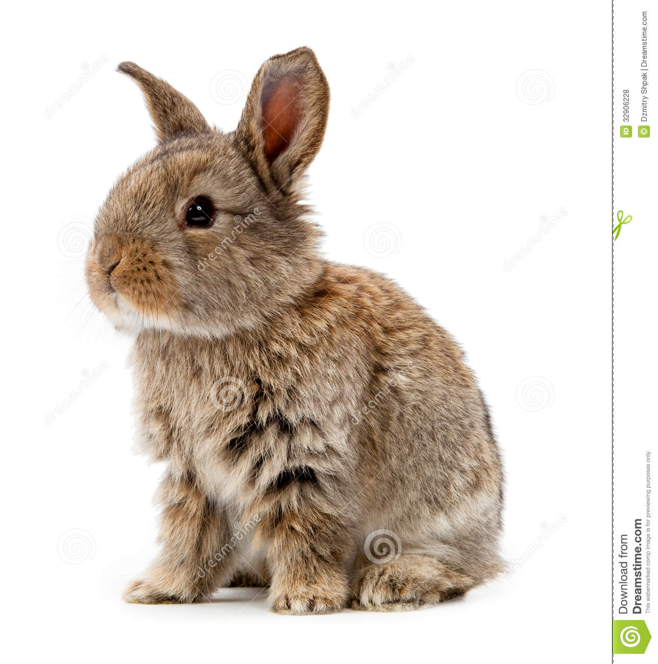 rabbit isolated on a white background stock photo image rabbit vector free rabbit vector free download