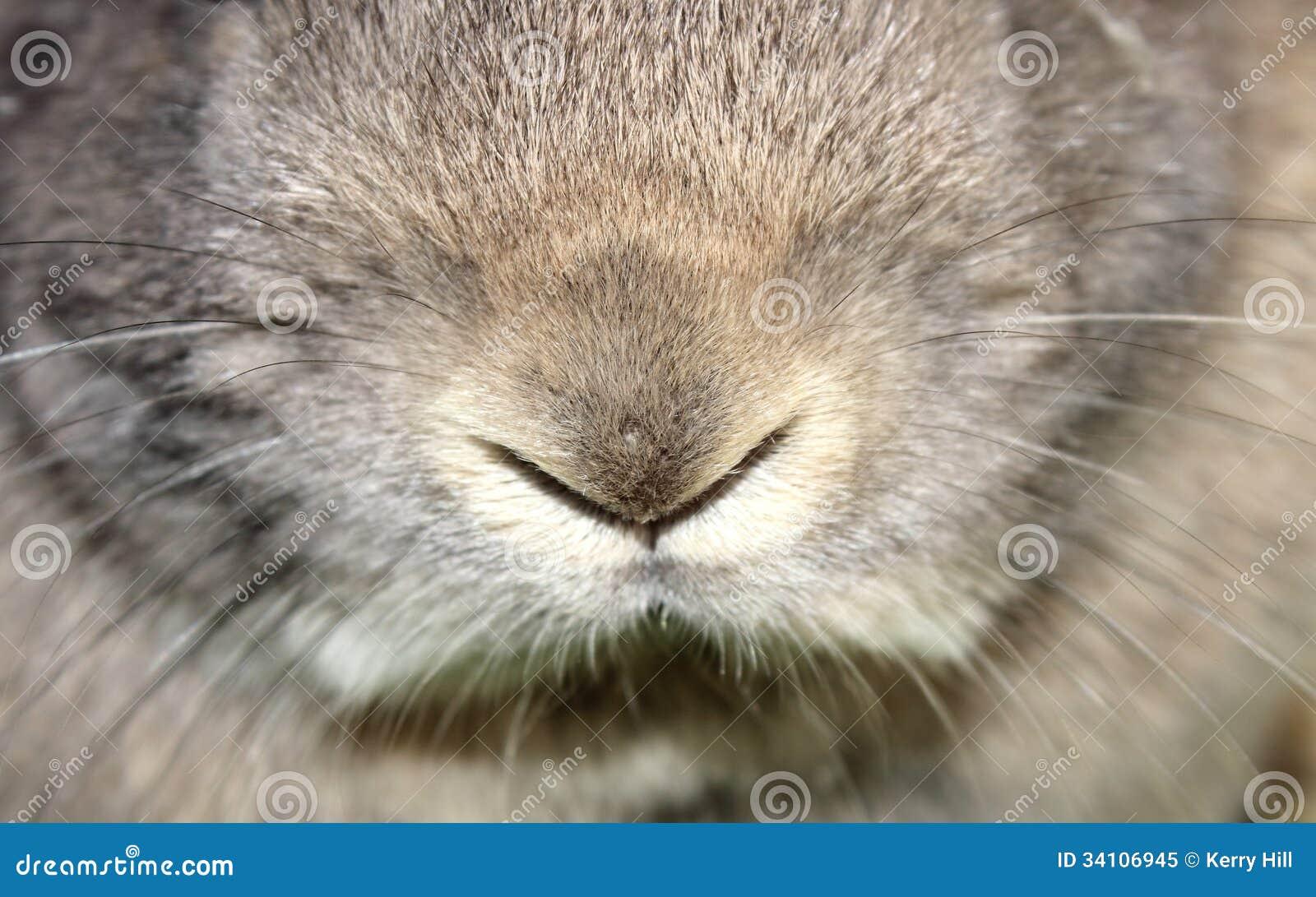 Rabbit Nose Royalty Free Stock Photo Image 34106945