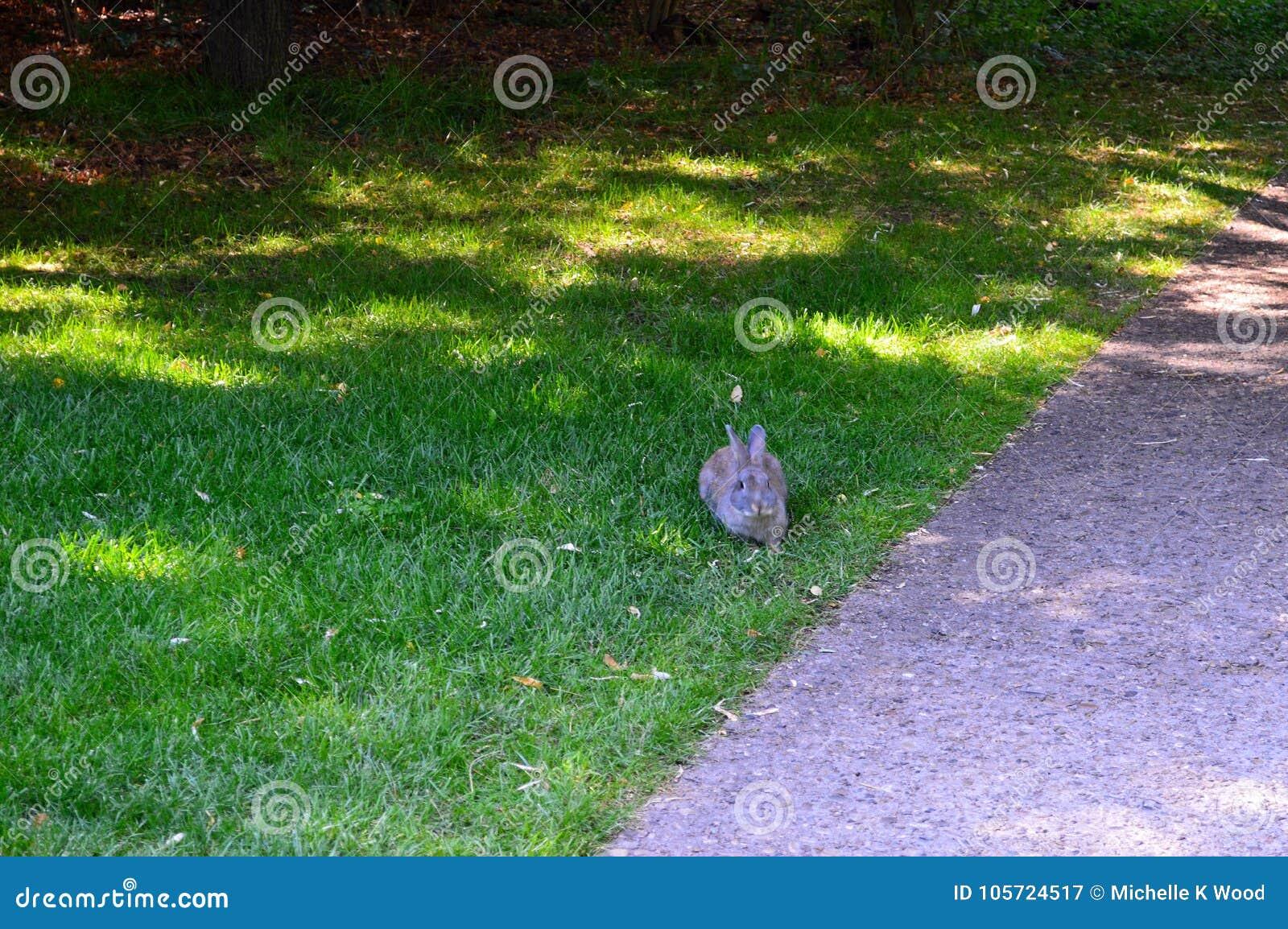 Rabbit on the path at Alberston`s Park Boise Idaho