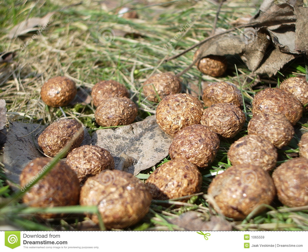 Royalty Free Stock Images: Rabbit poop