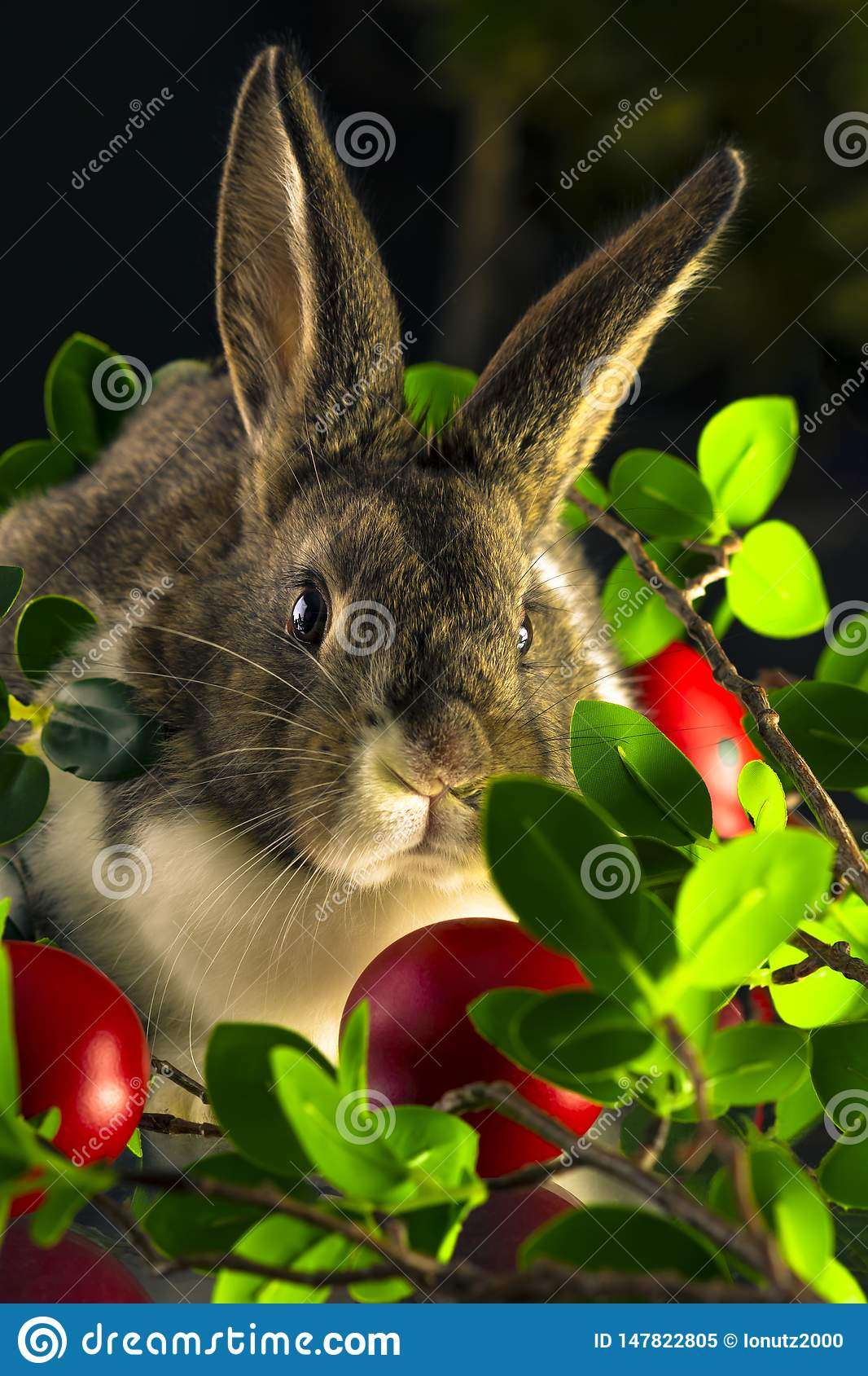 Rabbit with red easter eggs
