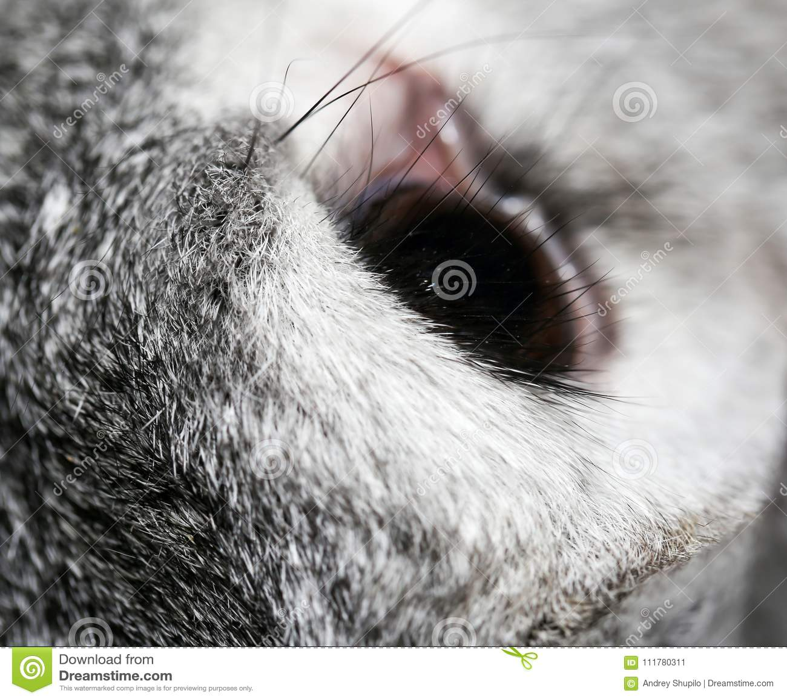 A rabbit`s eye on the farm. macro