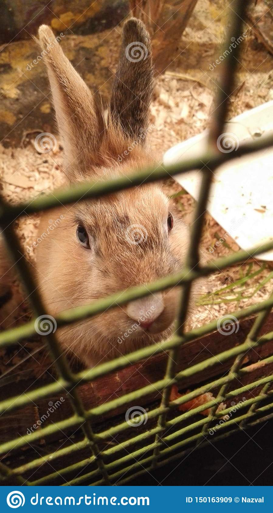 Rabbit sitting in a cage and looks angry and hungry eyes