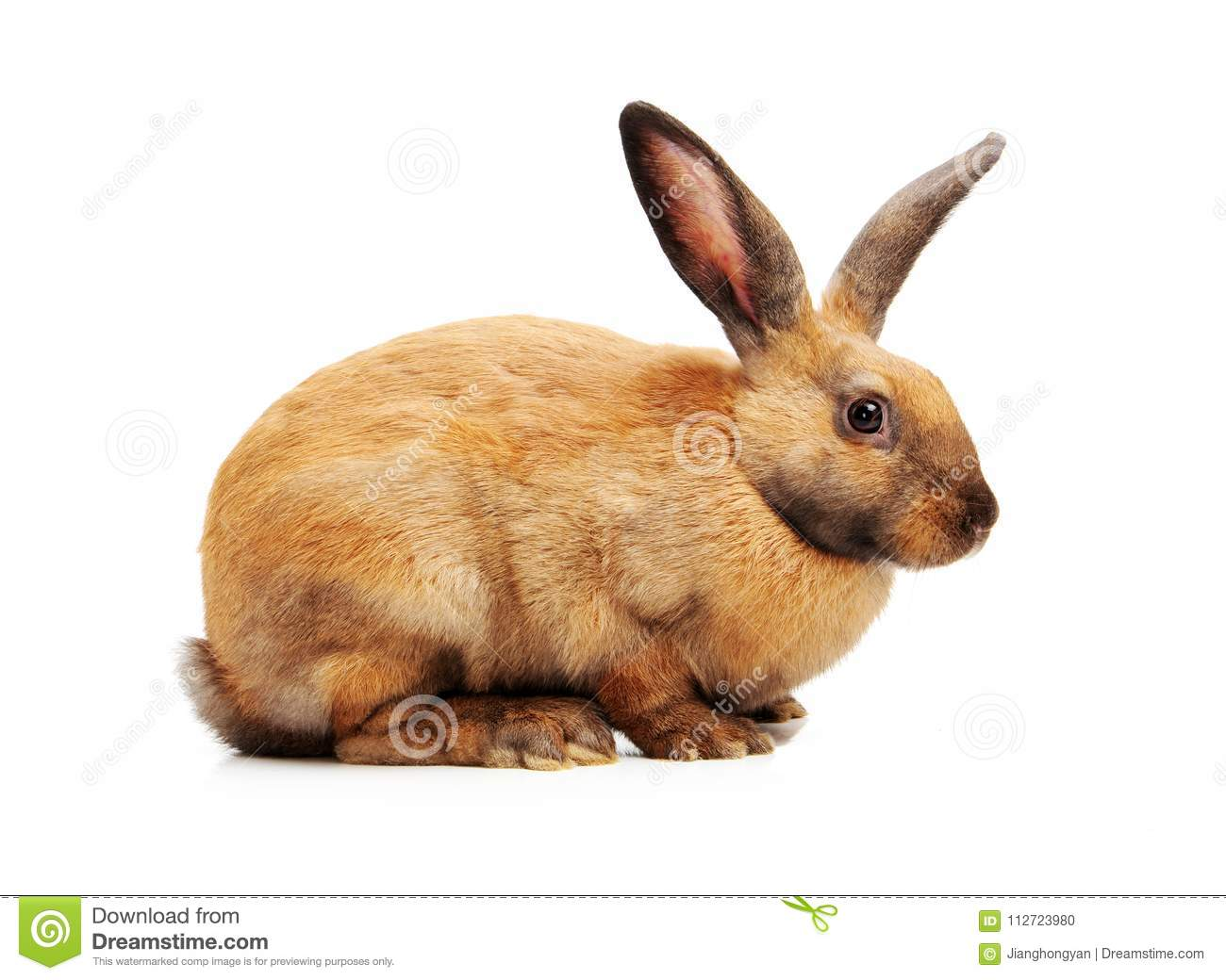 Rabbit sitting in front