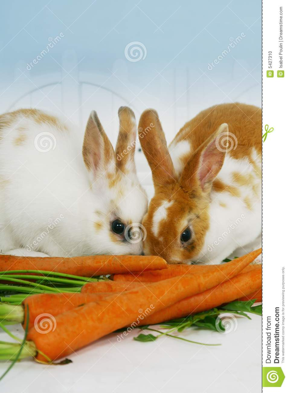 view of two cute little rabbits eating on a bunch of carrots.