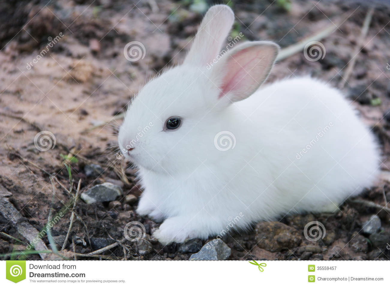 Rabit Royalty Free Stock Photography - Image: 35559457