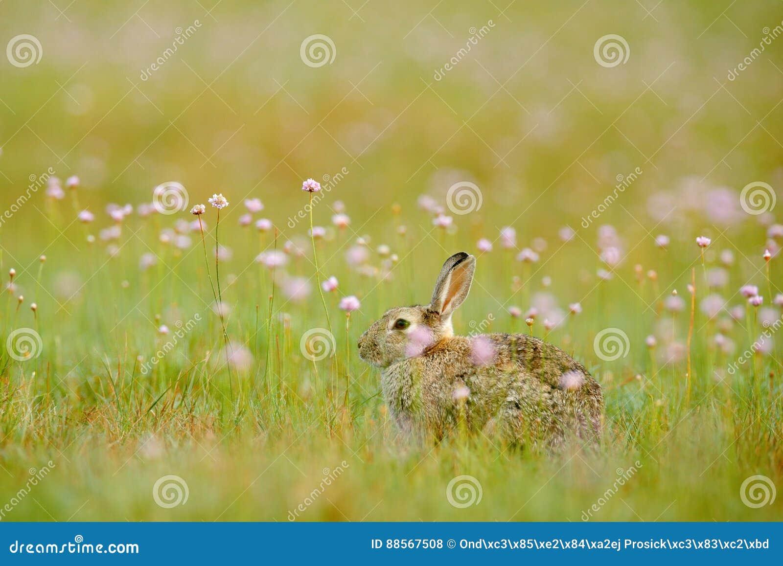 Rabit en flores de la primavera del silbido de bala Conejo lindo con el diente de león de la flor que se sienta en hierba Animal