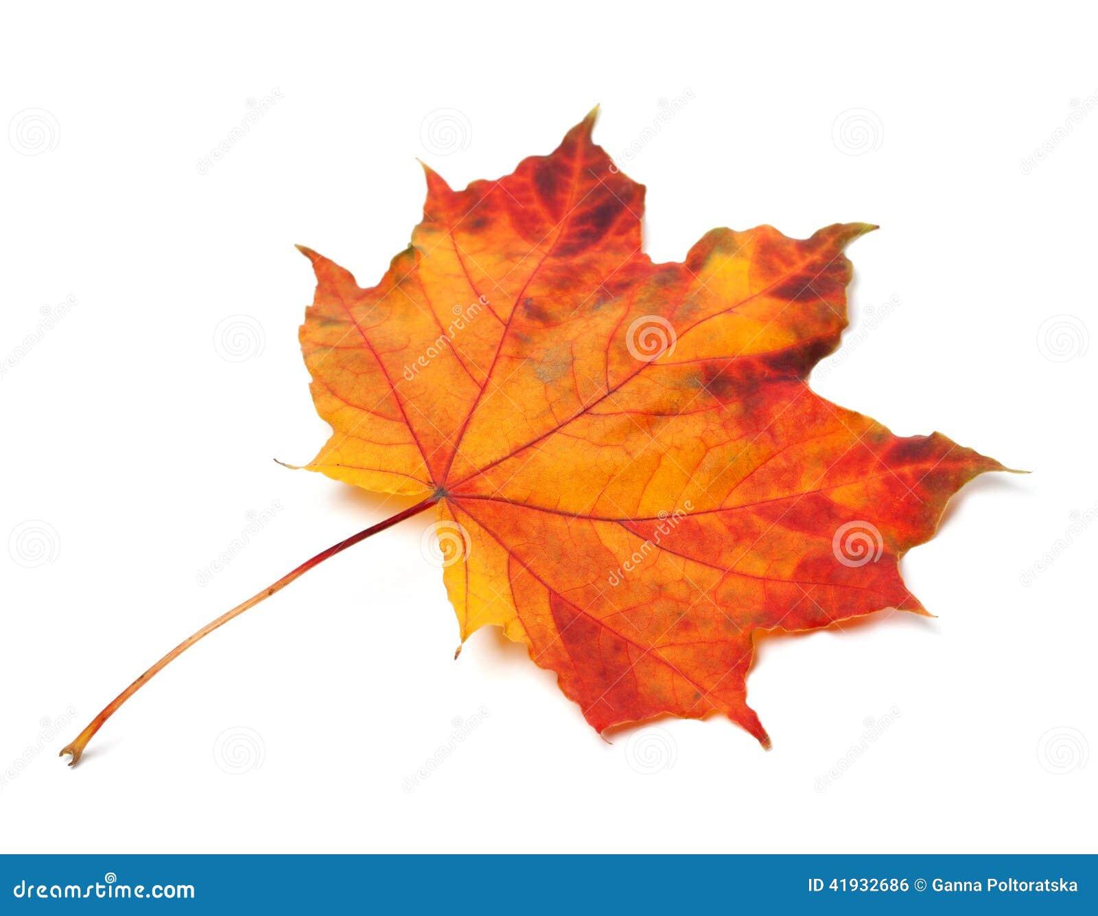 Rable feuille orange d 39 automne photo stock image 41932686 - Image feuille automne ...