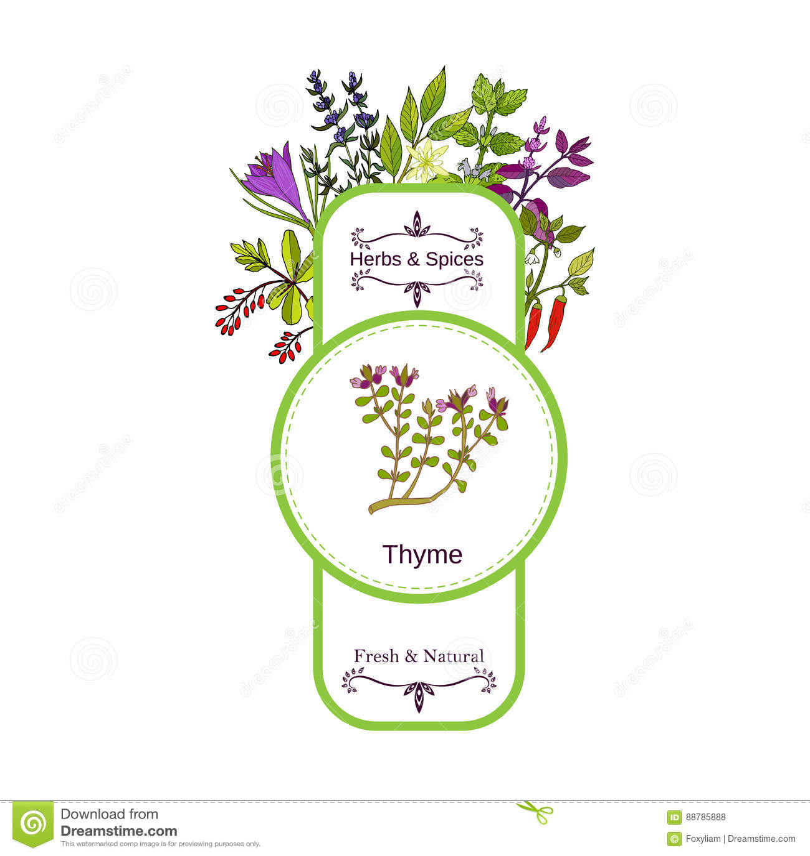 Raccolta d annata dell etichetta delle spezie e delle erbe timo