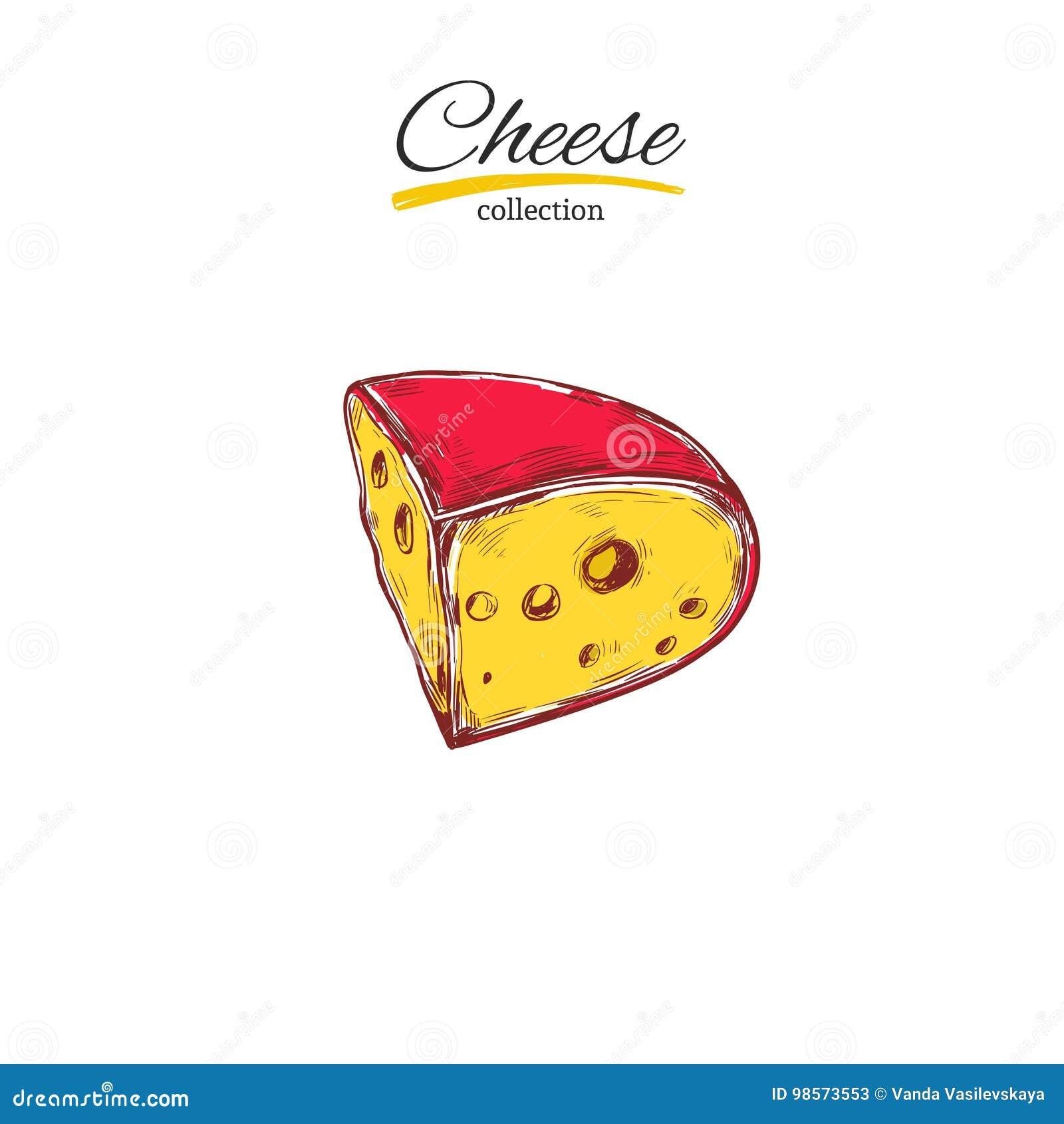 Raccolta del formaggio Illustrazione disegnata a mano di vettore dei tipi del formaggio colorful