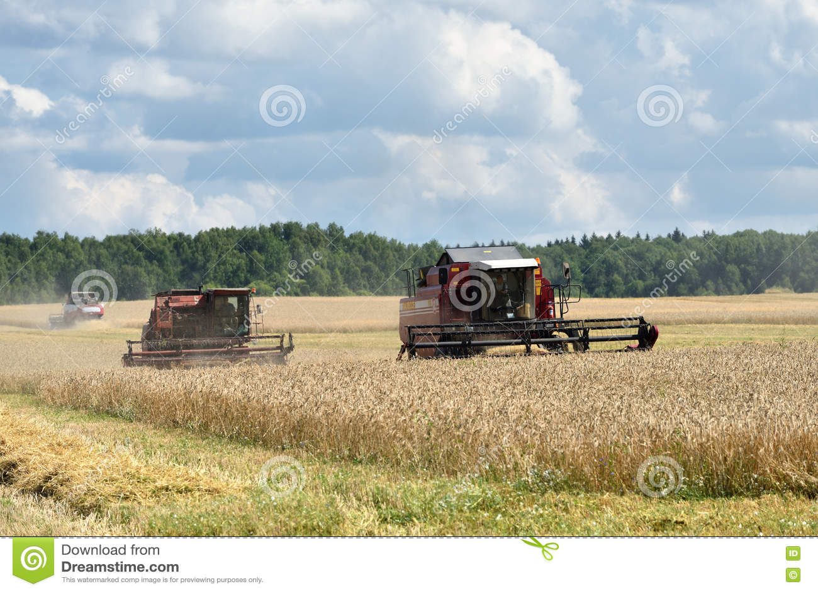 5d0e227402 NARO-FOMINSK, RUSSIA - 31 LUGLIO 2016: Raccolta del grano Mietitrebbiatrice  nei campi agricoli La Russia si allinea in primo luogo nell'esportazione di  ...
