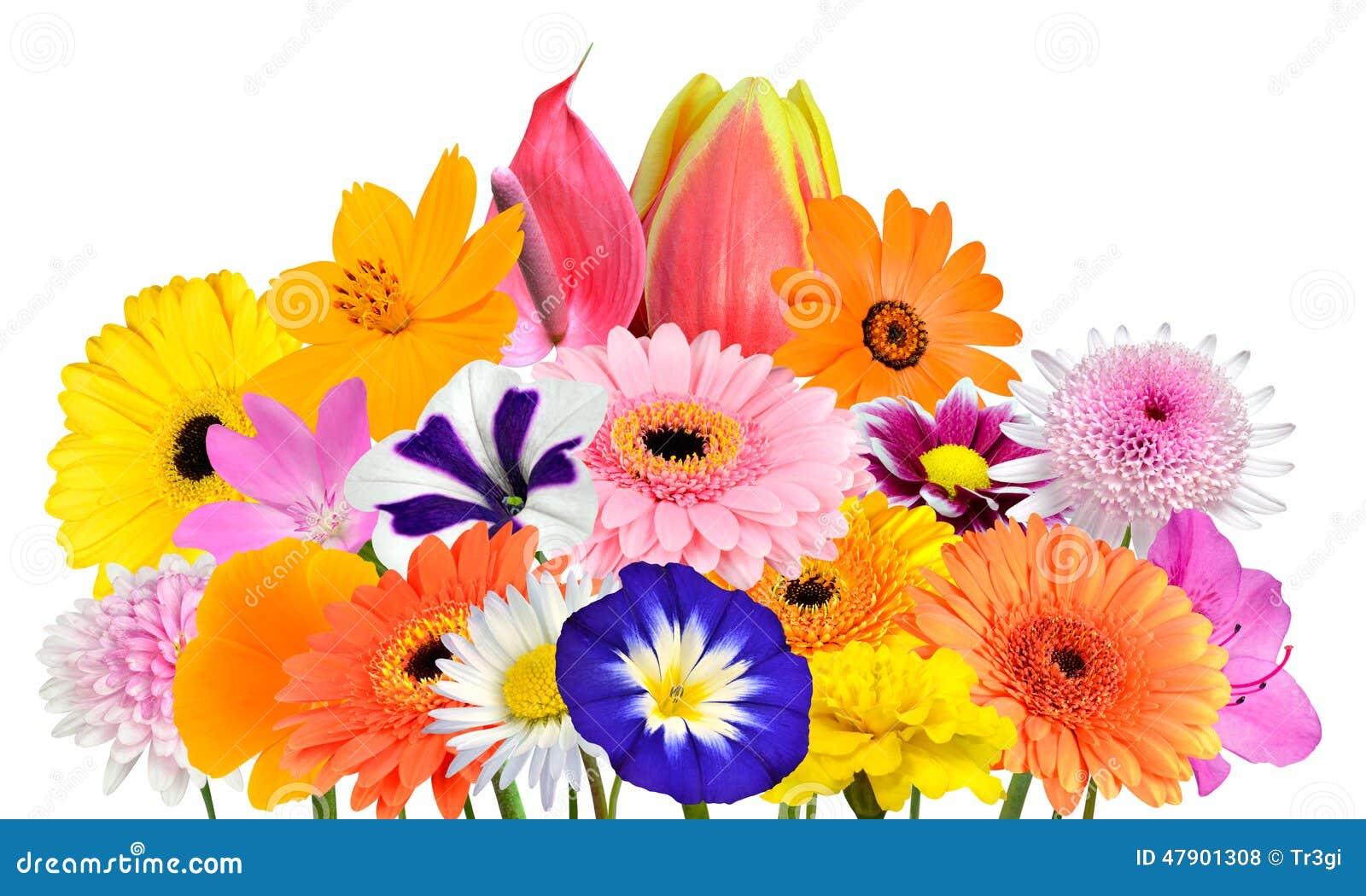 Raccolta del mazzo del fiore di vari fiori variopinti for Progetti di costruzione del mazzo