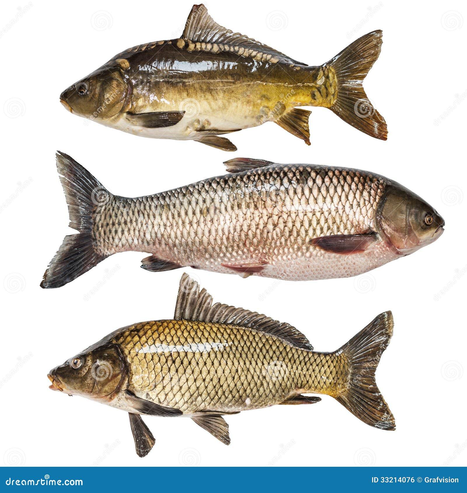 Raccolta del pesce