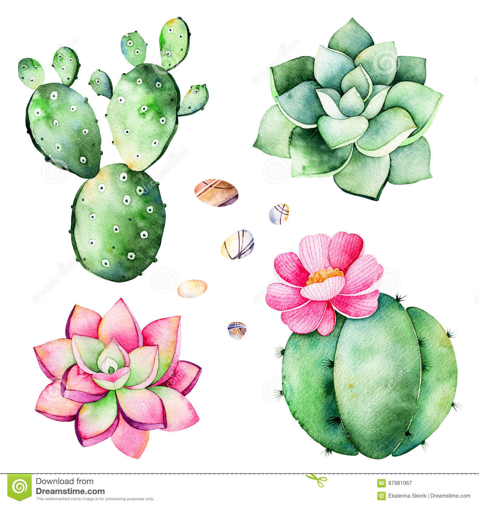 Raccolta dell acquerello con le piante dei succulenti, pietre del ciottolo, cactus