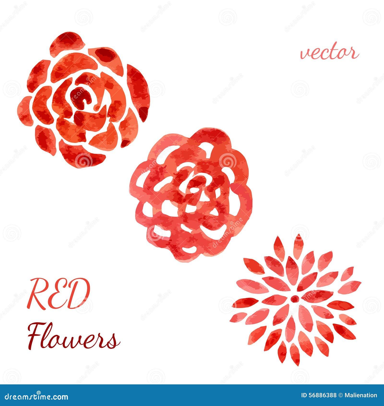 Raccolta dell acquerello delle rose Fiori impostati Vector l illustrazione disegnata a mano per l invito, le nozze ed il saluto