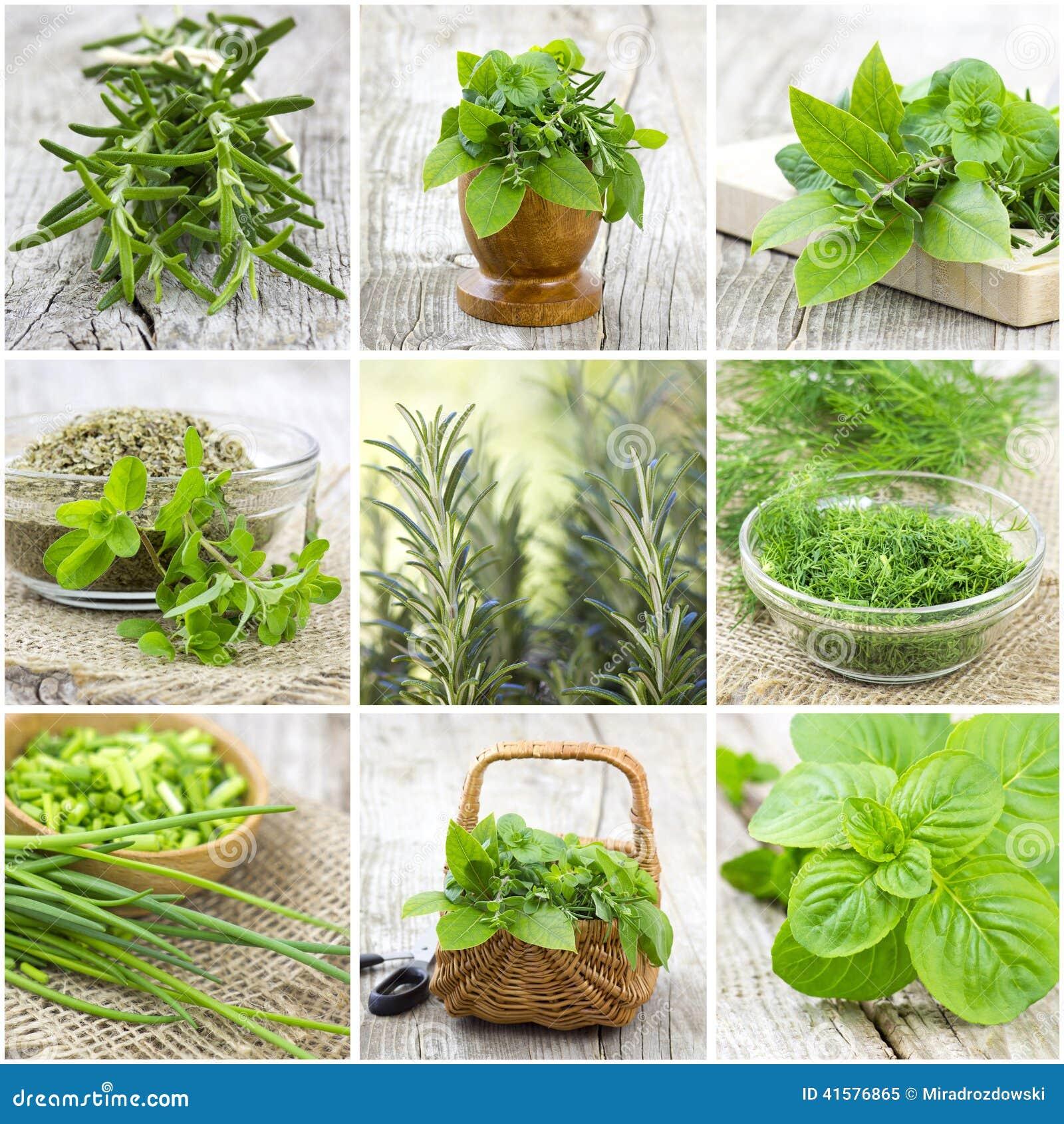 Raccolta delle erbe - collage