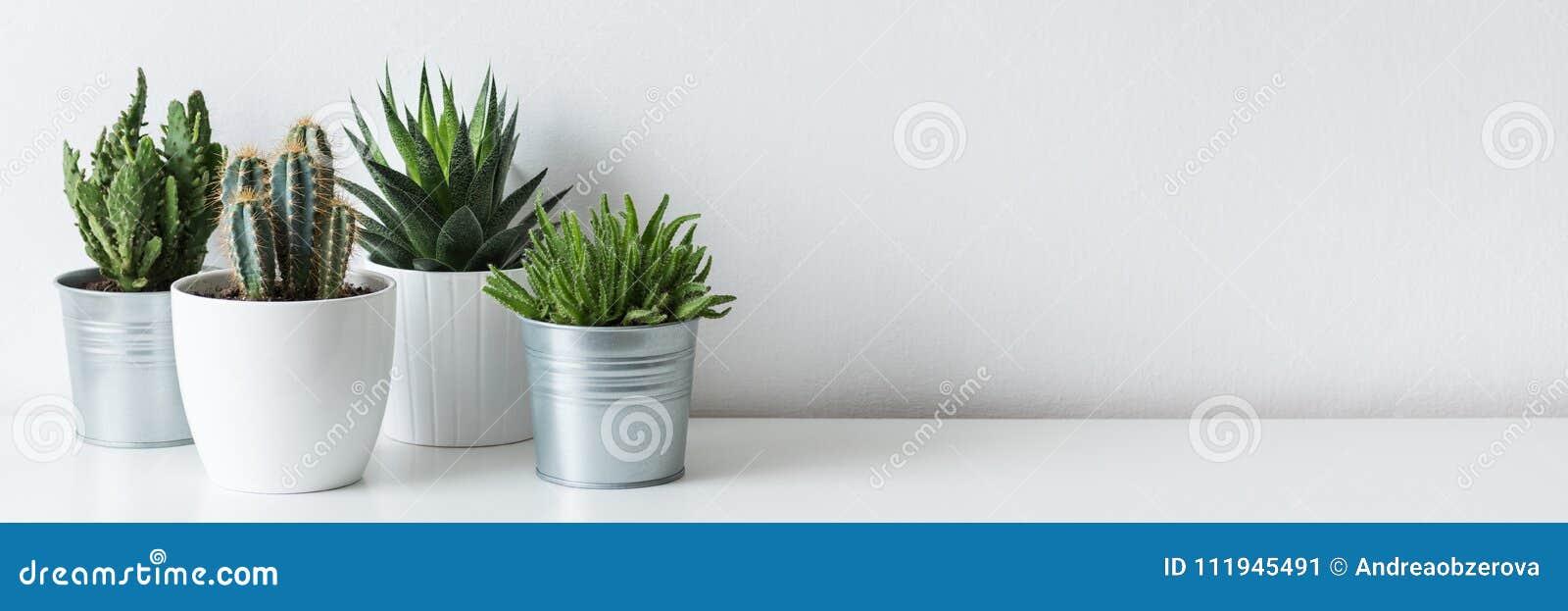 Raccolta di vari cactus e crassulacee in vasi differenti Piante conservate in vaso della casa del cactus sullo scaffale bianco