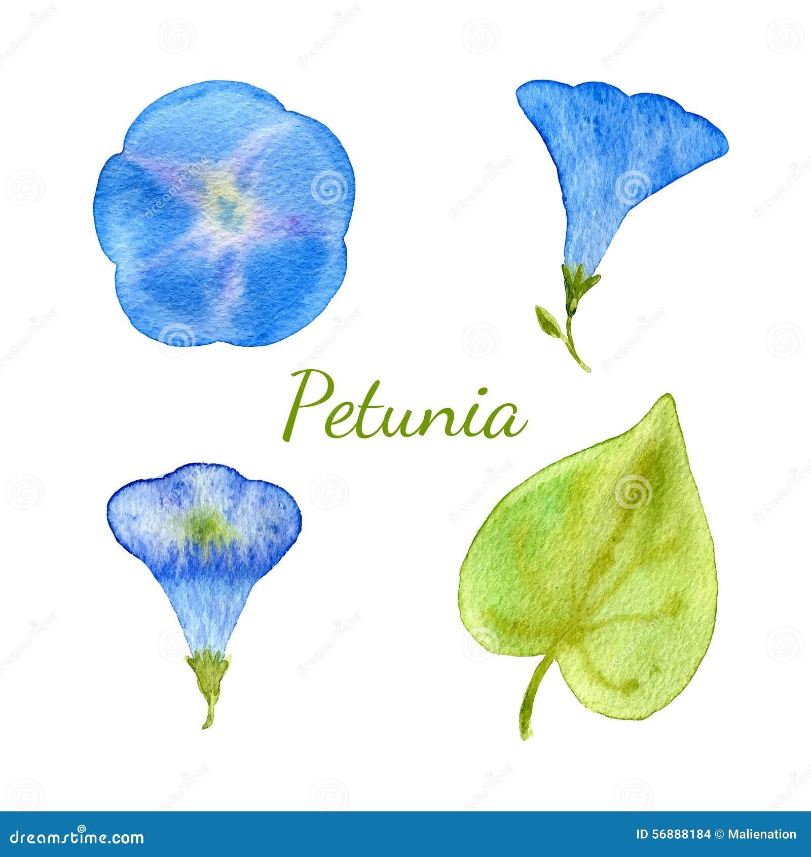 Raccolta floreale dell acquerello I fiori e le foglie, rami, erbe progettano l insieme di elementi Vettore disegnato a mano