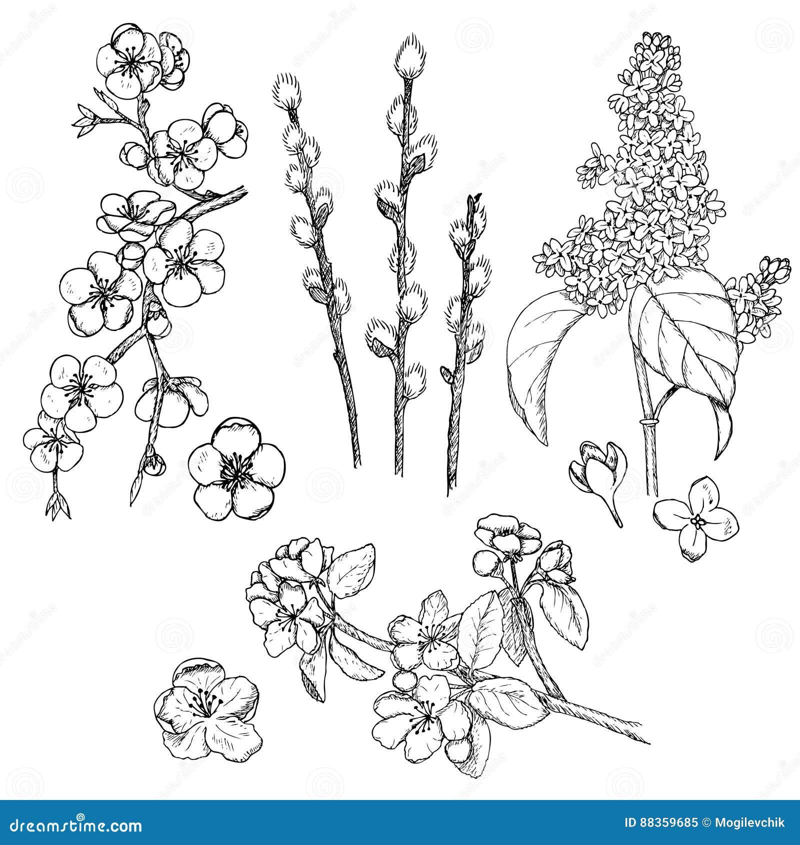 Raccolta naturale della primavera disegnata a mano