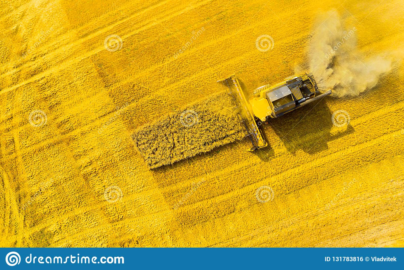 Raccolto del giacimento di grano