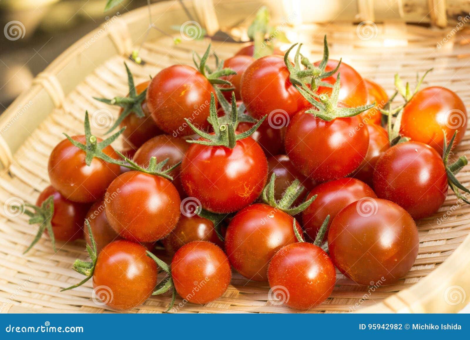 Raccolto del pomodoro ciliegia all orto