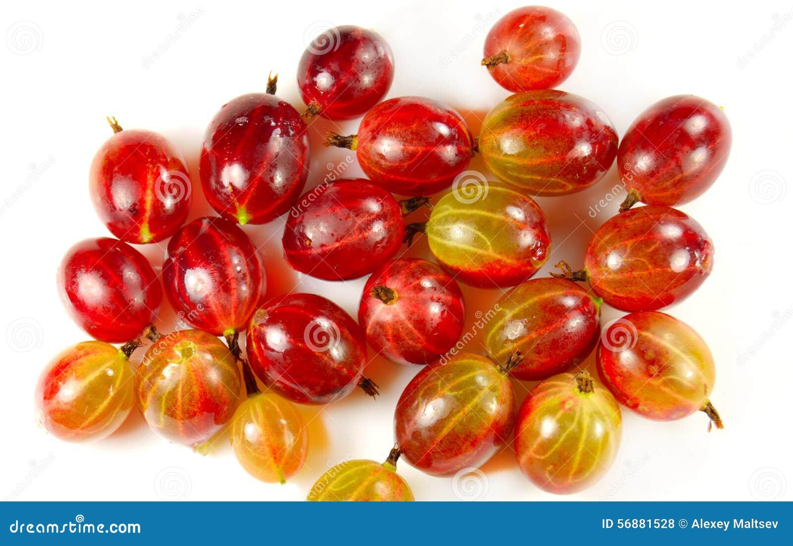 Raccolto dell uva spina