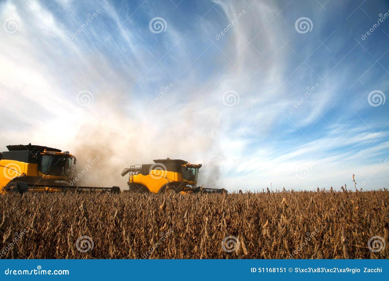 Raccolto della soia