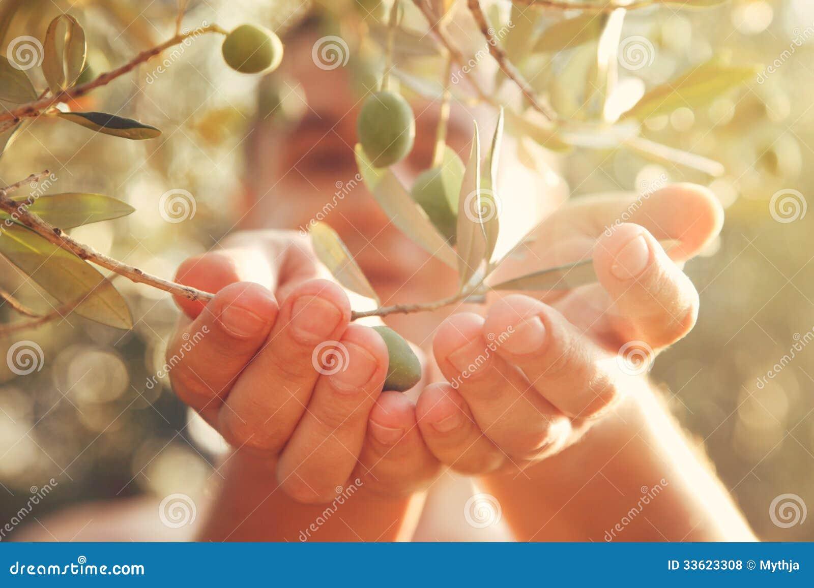 Raccolto delle olive