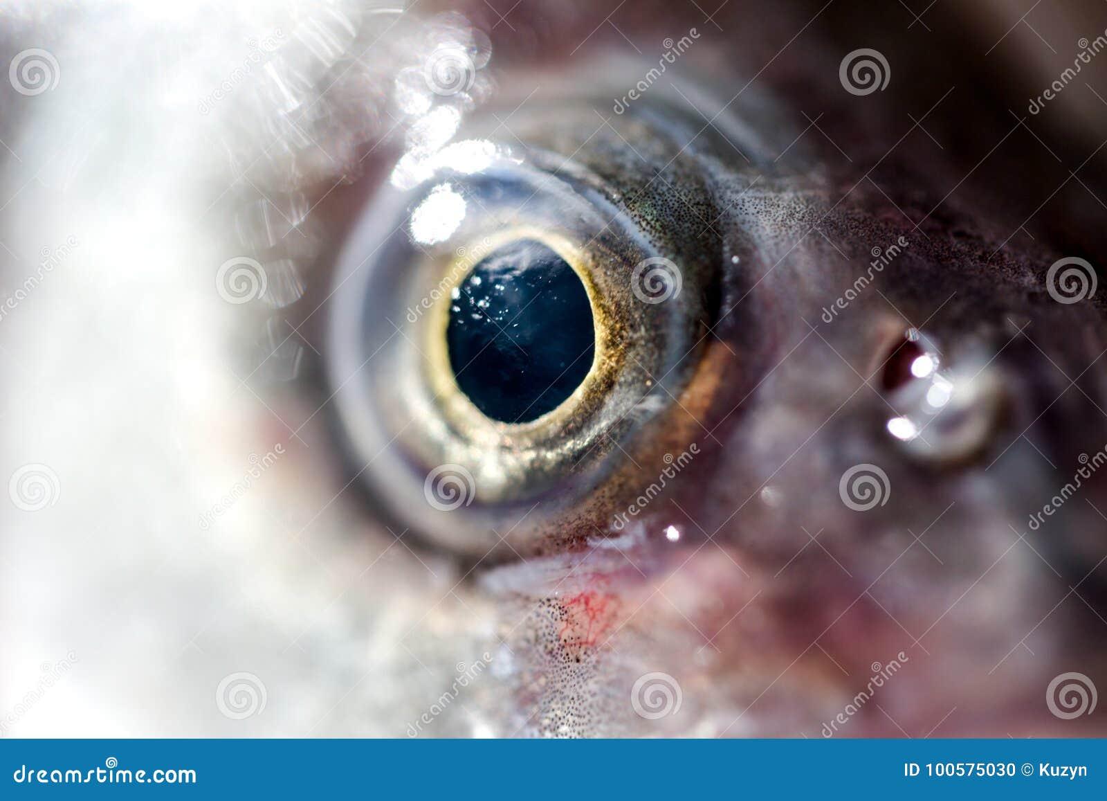 Raccolto estremo dell occhio di pesce il macro