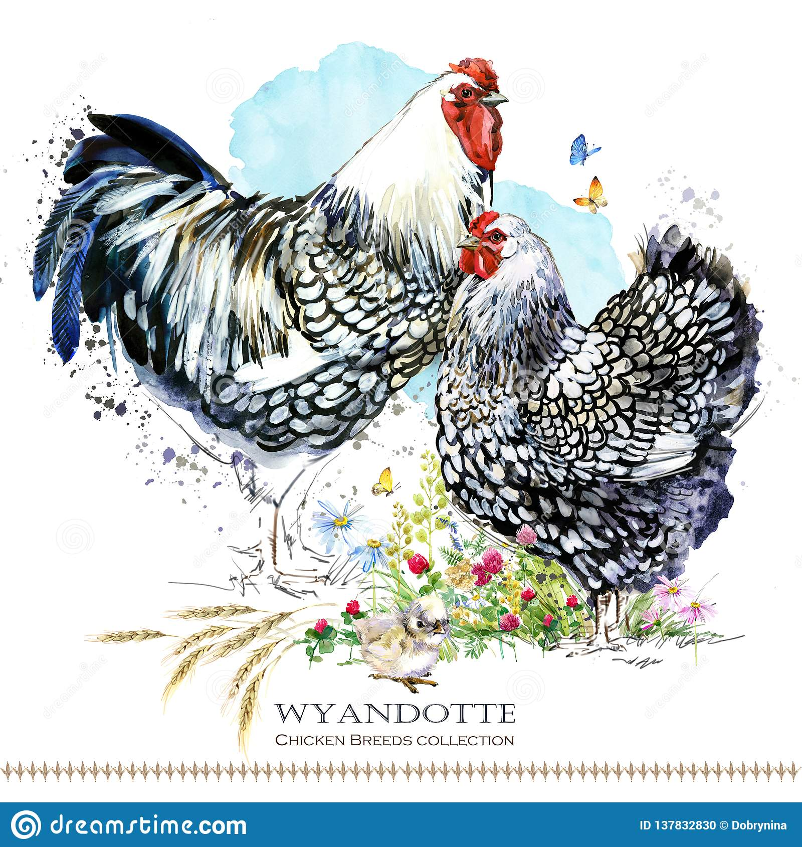Race de poulet de Wyandotte Aviculture ferme domestique birdFriesian