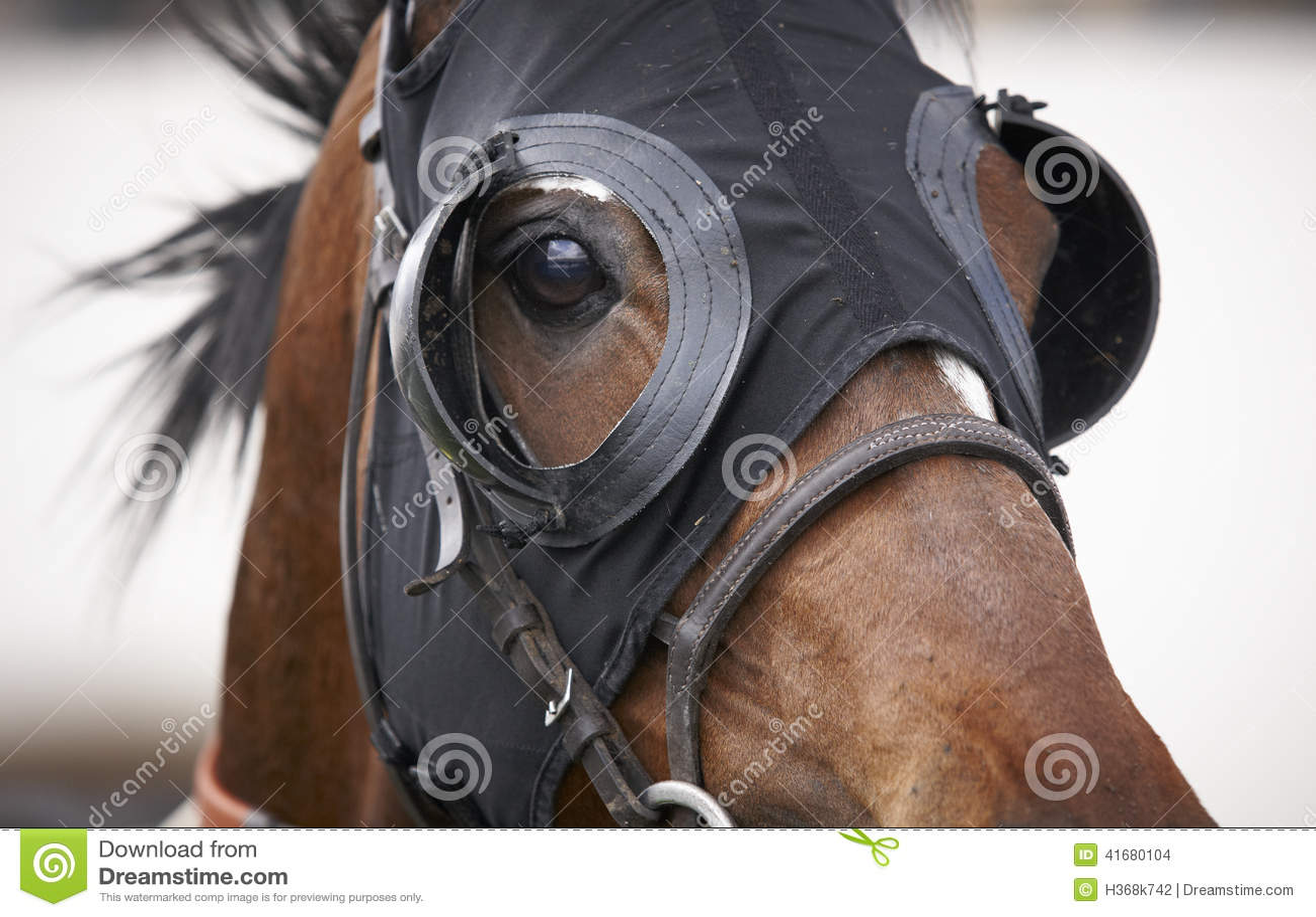 racing blinkers for horses