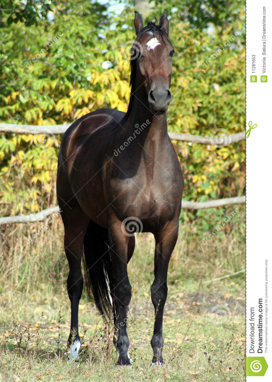 Race ukrainienne de cheval image stock image du libert for Multiplication cheval