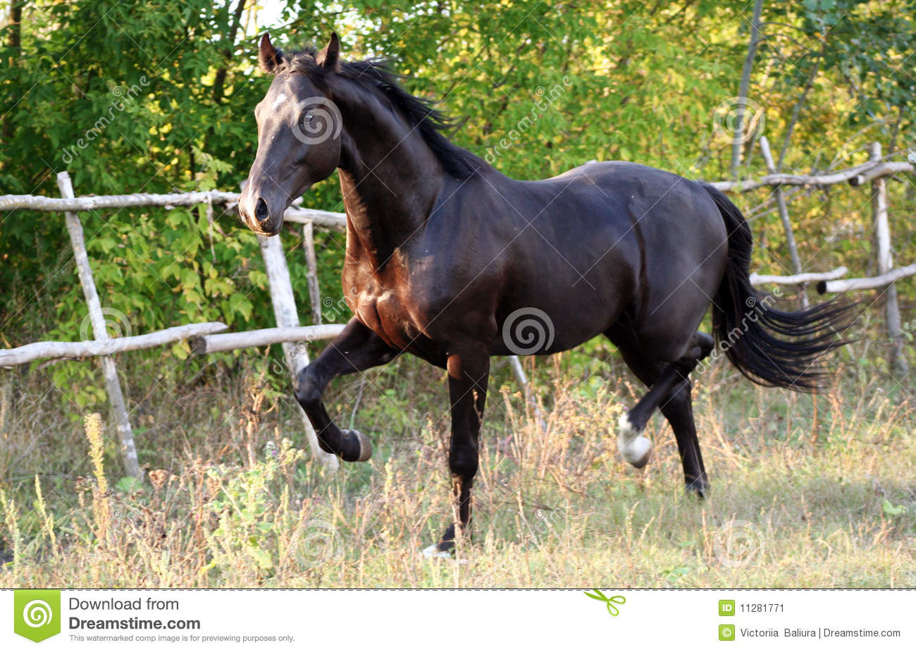 Race ukrainienne de cheval image stock image 11281771 for Multiplication cheval