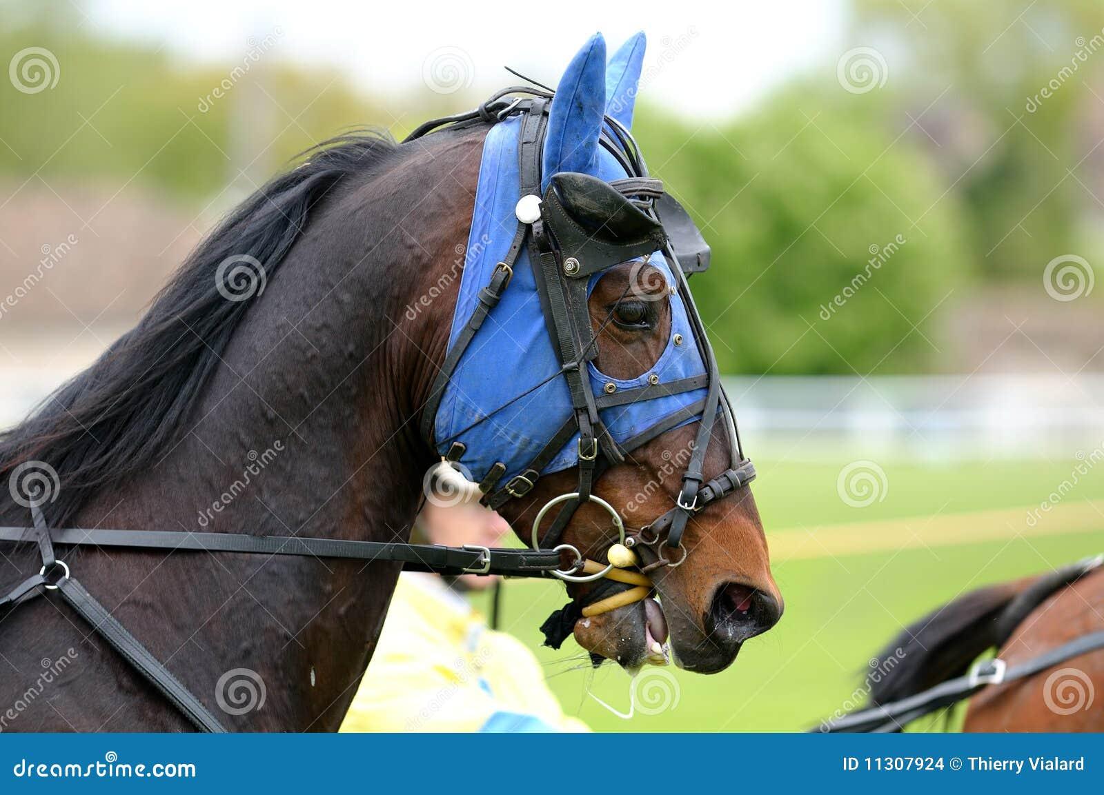 Racehorce