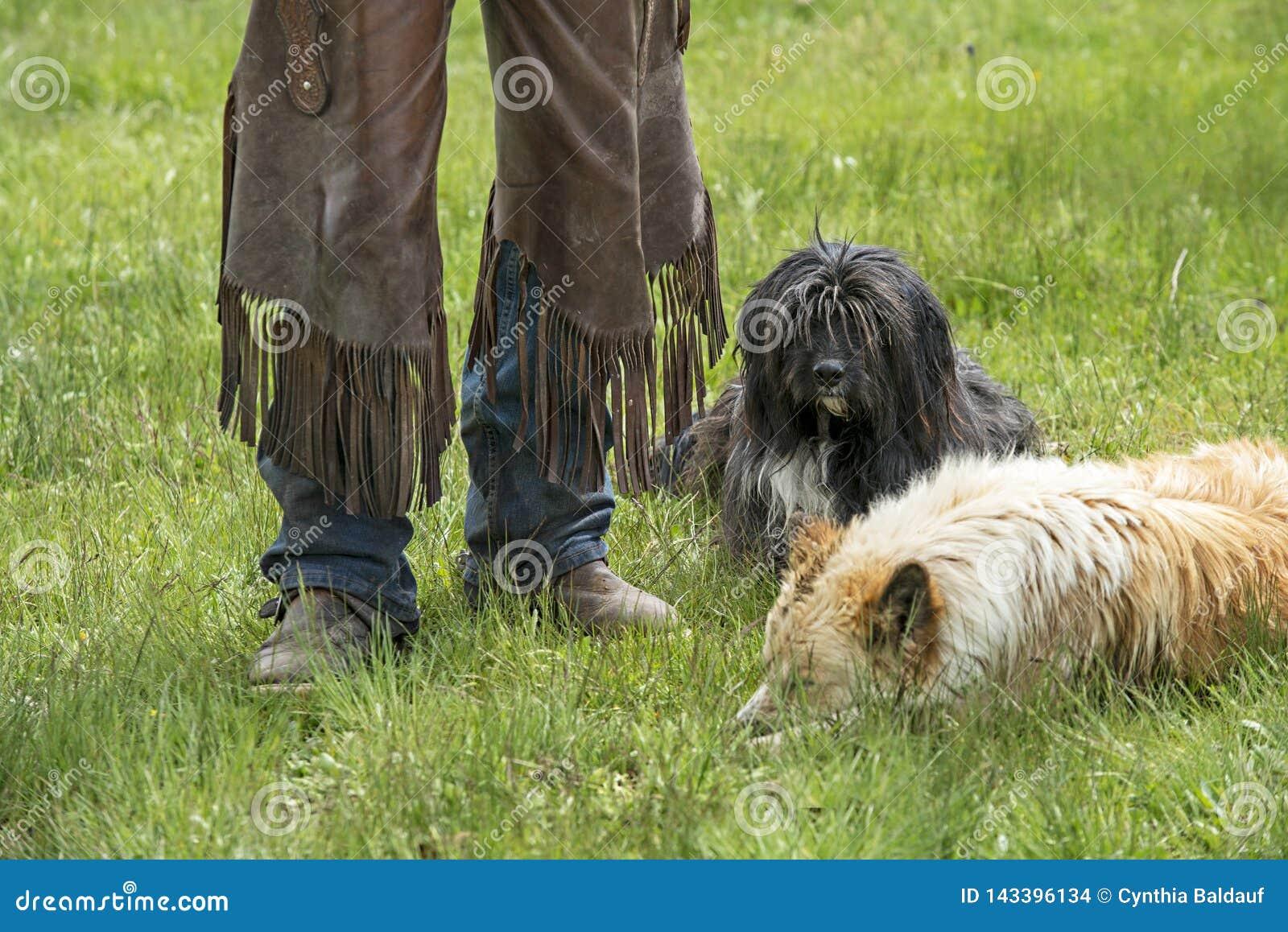 Rachaduras gastadas e cães gastados