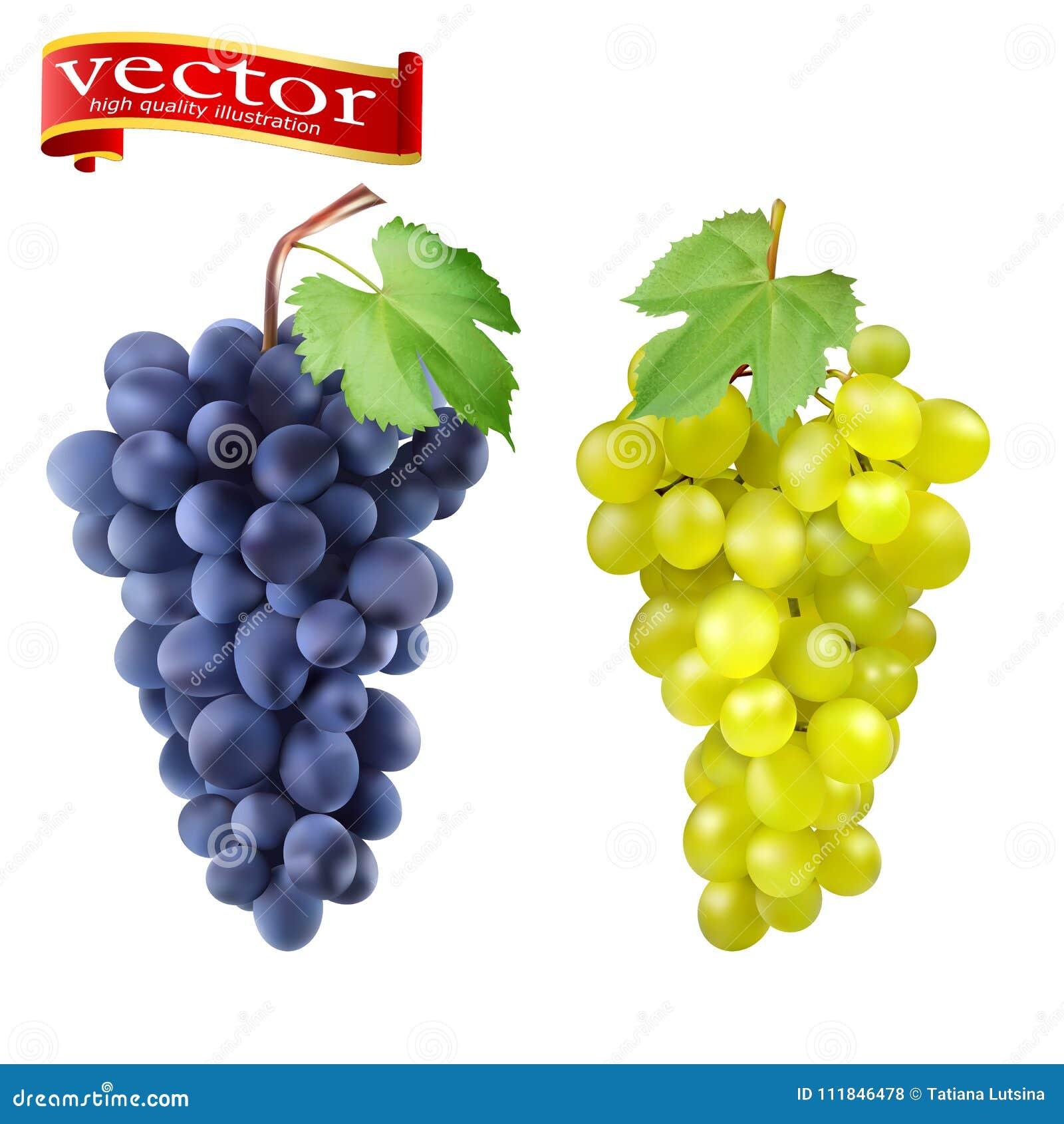 Racimo de uvas rojas y de sistema blanco del vector 3d para el diseño Manojo de uvas maduras, vector jugoso, alto del detalle