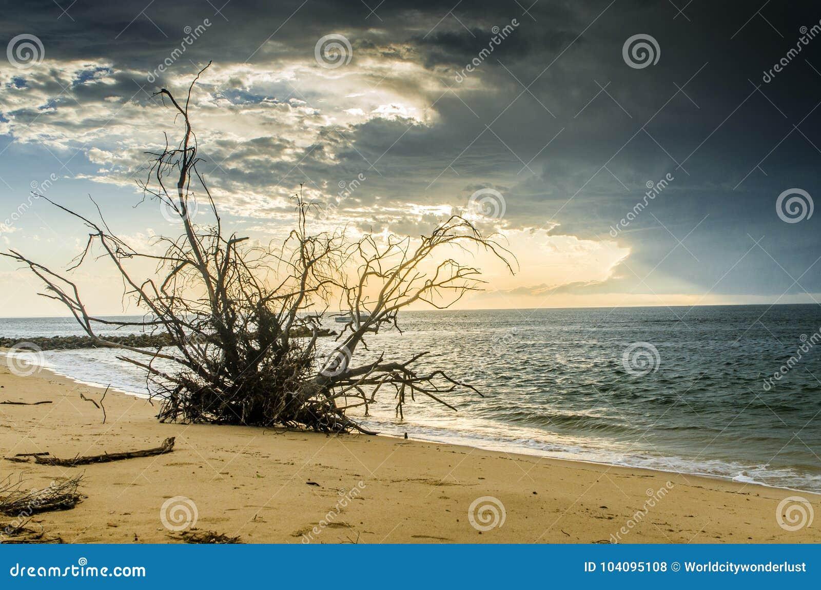 Racines d arbre sur la plage
