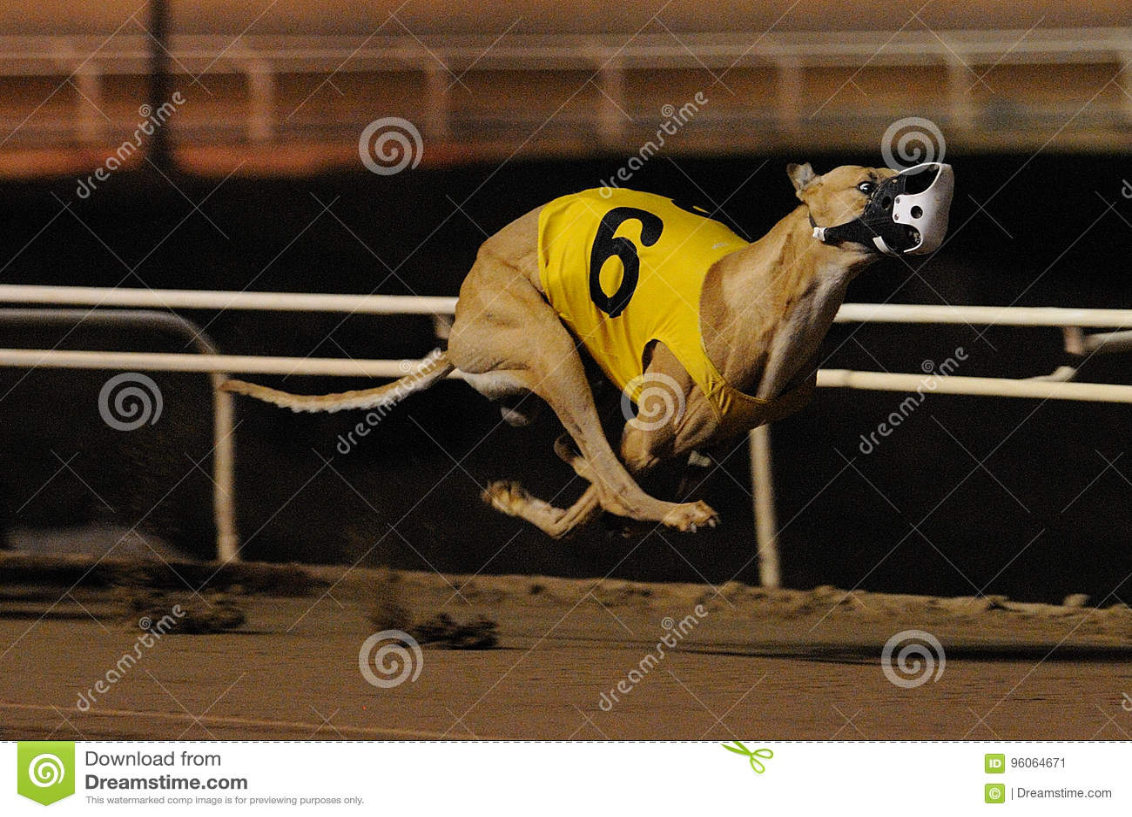 dog racing phoenix
