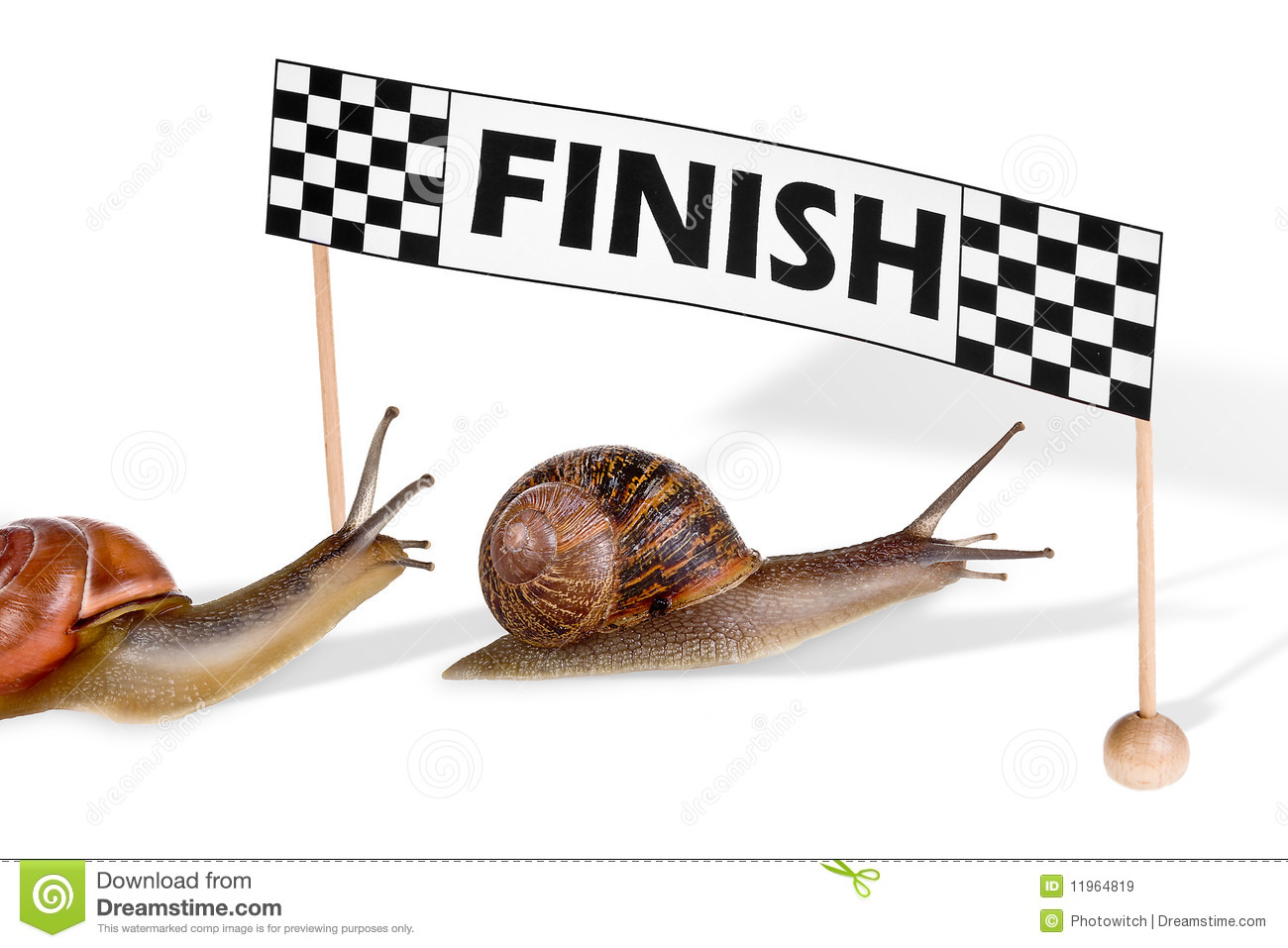 Racing Snails Royalty Free Stock Images - Image: 11964819