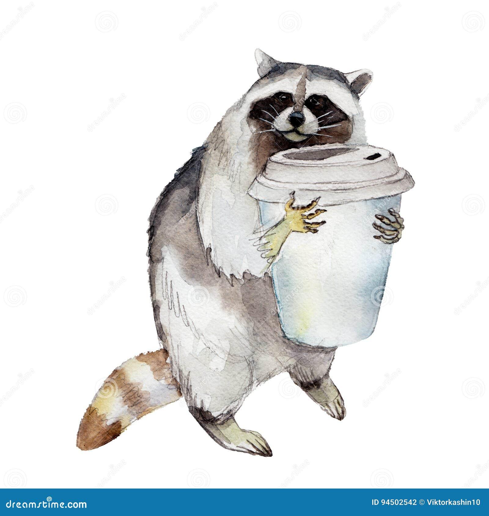 Racoon με την κούπα καφέ, ζωικός χαρακτήρας που απομονώνεται στο άσπρο υπόβαθρο