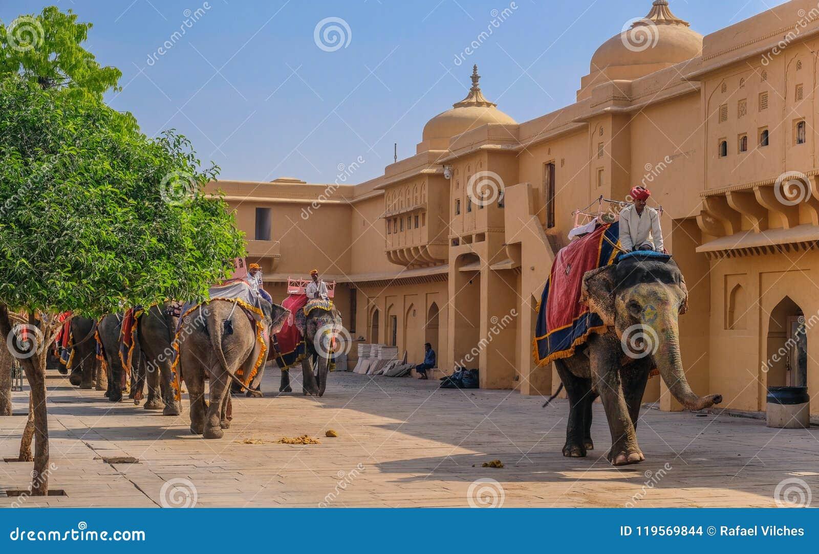 Rad av elefanter på Amber Fort