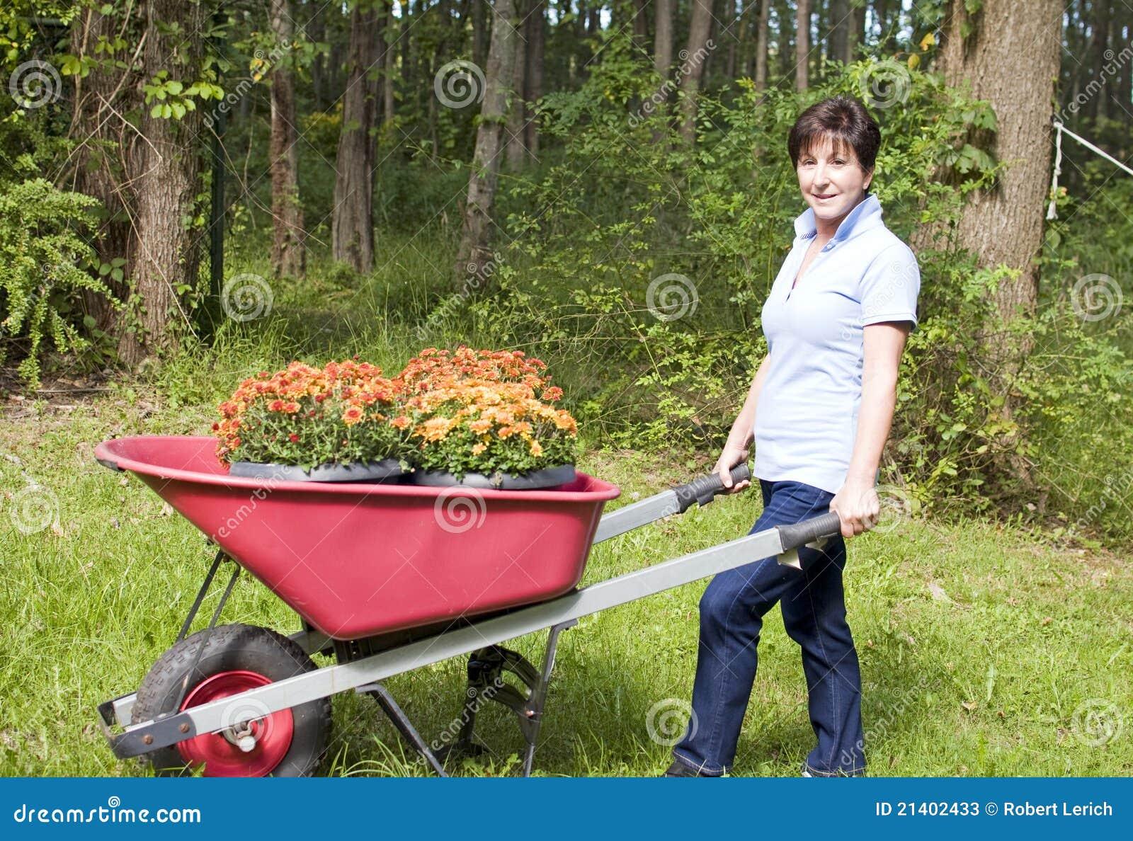 Radeberchrysanthemen der frau im garten arbeiten stockbild for Garten arbeiten