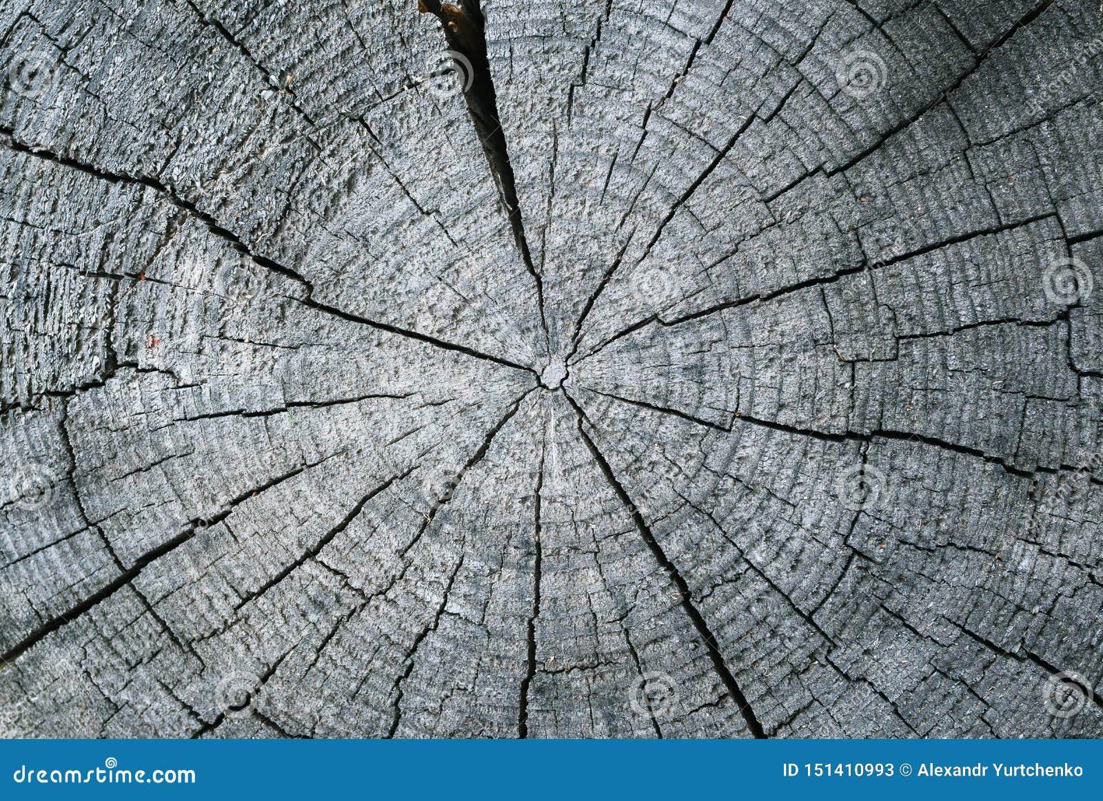 Radiale besnoeiing van een oud droog logboek