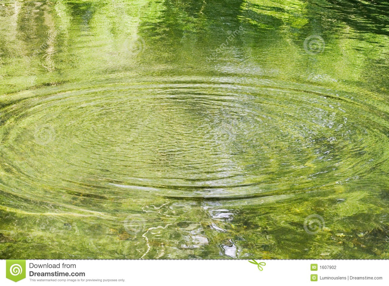 Radiating ripples on a green pond stock photo image 1607902 for Green pond water