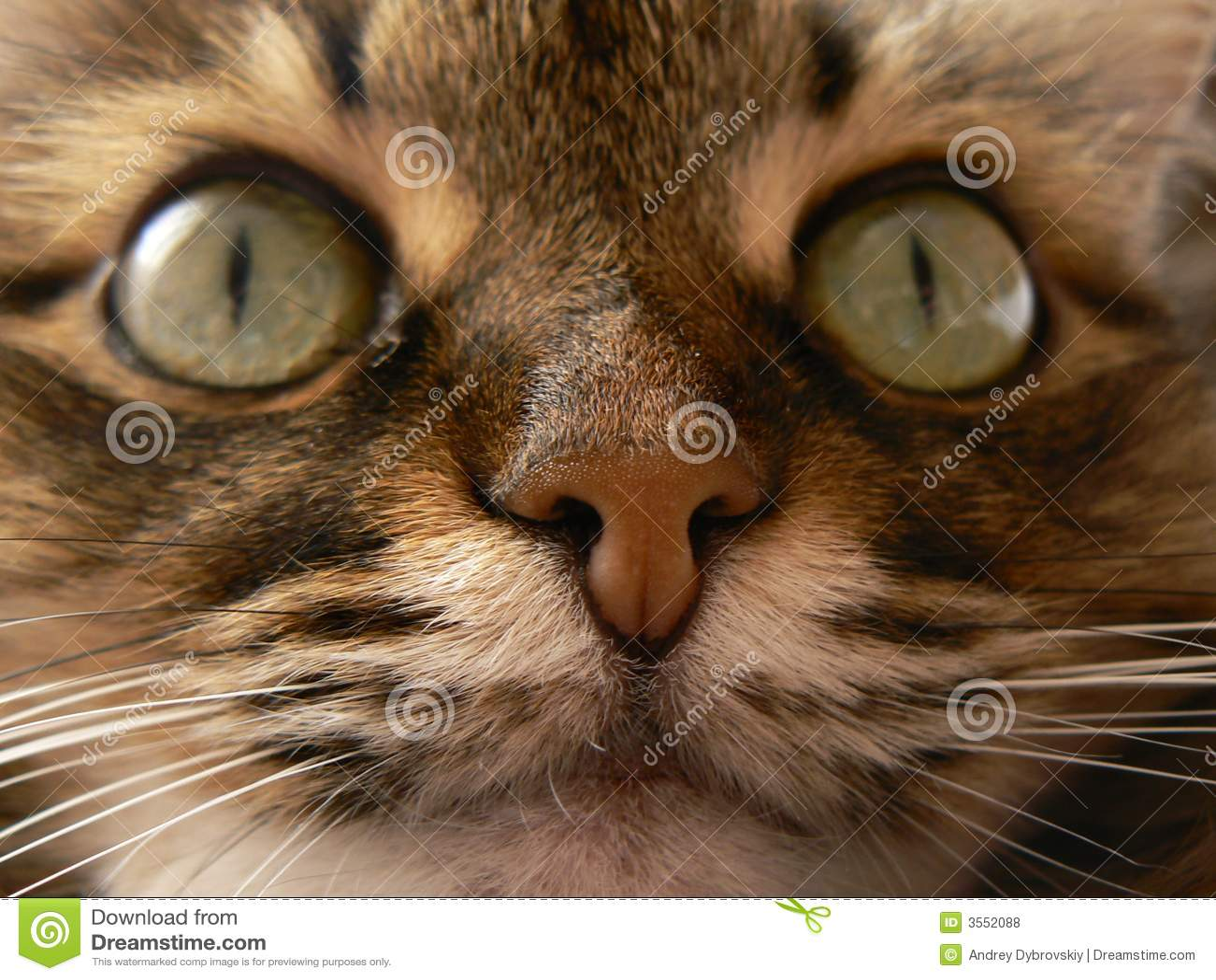 Radiatore anteriore felino